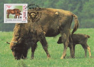 Lithuania 1996 Maxicard Sc #531 70c European bison WWF