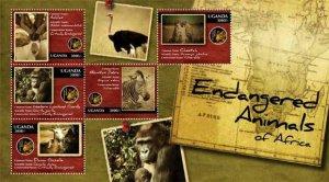 Uganda 2012 Endangered Animals, Cheetah, Mountain Zebra, UGA1202H