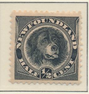 Newfoundland (Canada) Stamp Scott #58, Mint Hinged, Paper Remnants - Free U.S...