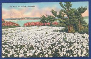 Bermuda Postcard With Stamp Postmarked 1948 (HP4)