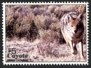 North American Coyote - Canis Latrans - Cinderella - MNH