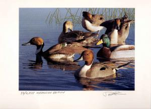 OREGON #15 1998 STATE DUCK STAMP PRINT Med Ed + 2 stamps by Robert Steiner