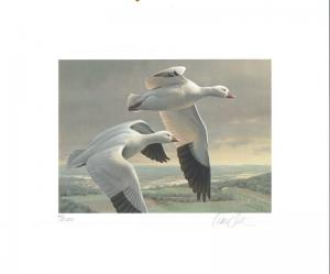MINNESOTA #15 1991 STATE DUCK STAMP PRINT ROSS' GEESE by Daniel Smith 2 stamps