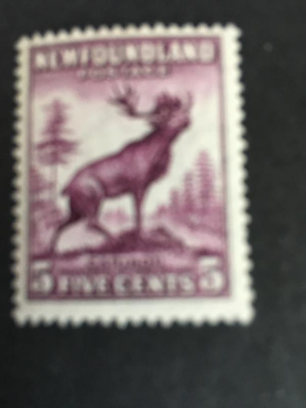 Newfoundland 2016 Scott #191a Mint F-NH Cat. $14. 1932 5c Caribou Die 1 Pf.13.5