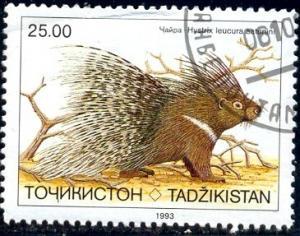 Porcupine, Hystrix Leucura, Tajikistan stamp SC#18 used