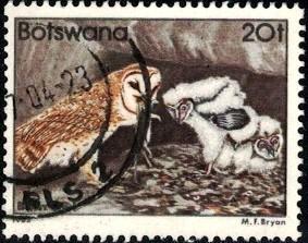Bird, Barn Owls, Botswana stamp SC#313 Used