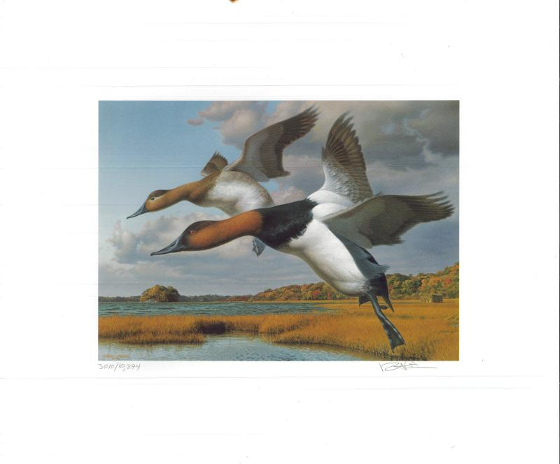 RHODE ISLAND  #1 1989 STATE DUCK STAMP PRINT CANVASBACKS by Robert Steiner