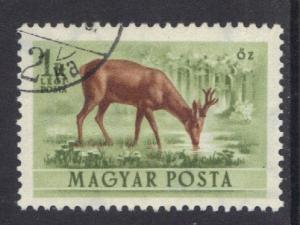 Hungary  1953  used Air forest animals 1fo. roe deer