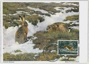 32222 MAXIMUM CARD - POSTAL HISTORY - Yugoslavia: Hares, Jackrabbits,   1962