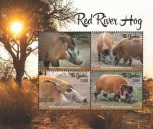 Gambia 2018 Fauna - Red River Hog