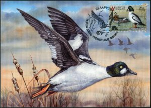 Belarus. 2016. Common goldeneye (Mint) Maximum Card