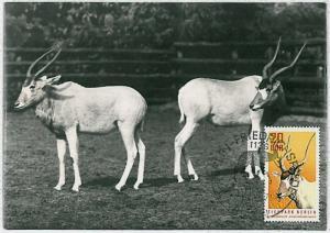 MAXIMUM CARD - POSTAL HISTORY - DDR: Goats, Fauna, 1971