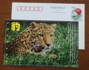 Endangered Species Felid leopard,CN00 rare wild animals in Qinling Mountain PSC