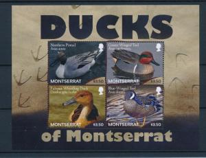 [40124] Montserrat 2012 Birds Vögel Oiseaux Ucelli  Ducks MNH Sheet