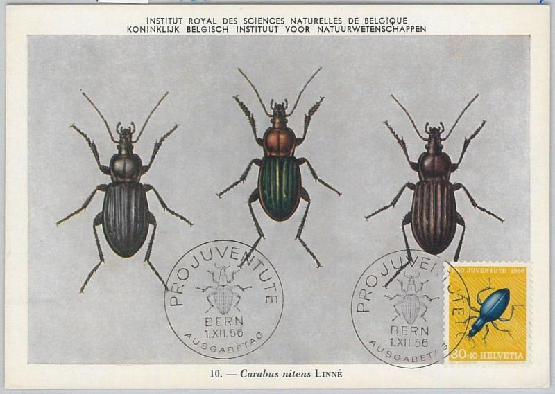 52711 - SWITZERLAND -  MAXIMUM CARD - 1956  PRO JUVENTUTE insects BETTLES