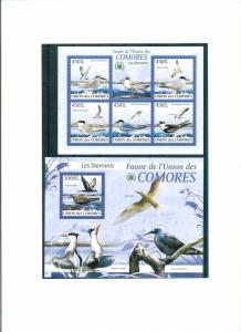 COMORES 2009 - BIRDS - LES STERNINIS