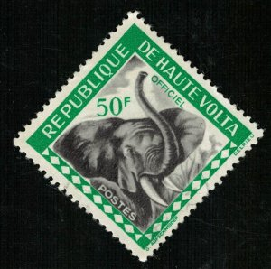 Animal Elephant 50F (T-5371)