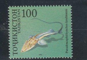 Tajikistan  Scott#  91d  MNH  (1996 Sturgeon)