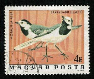 Bird (TS-2079)