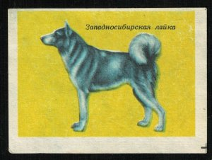 West Siberian Laika, Matchbox Label Stamp (ST-61)
