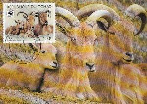 Chad 1988 Maxicard Sc #577 100fr Barbary sheep WWF