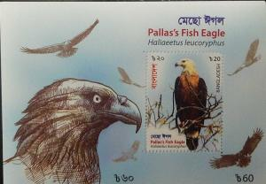 O) 2018 BANGLADESH, BIRDS OF PREY, HALIAEETUS LEUCORYPHUS -PALLAS´S FISH EAGLE,
