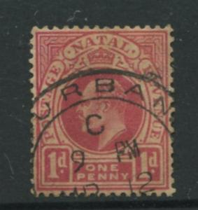 Natal - Scott 102 - KEVII Definitive Issue -1904 - Used - Single 1p  Stamp