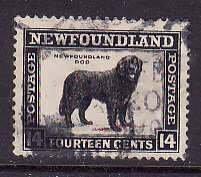 Newfoundland-Sc#194- id7-used14c Dog-1932-7-