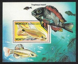 Mongolia Sail-finned Tetra 'Crenuchus spilurus' Aquarium Fish MS SG#MS1815