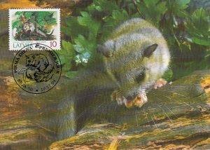 Latvia 1994 Maxicard Sc #383 10s Edible dormouse WWF