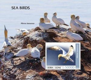 SIERRA LEONE - 2019 - Seabirds - Perf Souv Sheet - MNH
