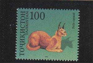 Tajikistan  Scott#  91a  MNH  (1996 Caracal)