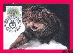 TRANSNISTRIA 2021 Nature Fauna Animals Mammals Wild Forest Cat MaxiCard Card