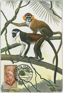 32170  MAXIMUM CARD - POSTAL HISTORY - Spanish Guinea:  Wild Animals, 1956