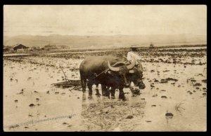 USA 1922 Honolulu Hawaii Private Water Buffalo RPPC Cover USED 97022