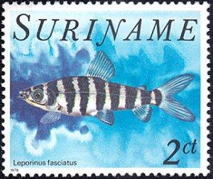 Surinam # 505 mnh ~ 2¢ Fish - Leporinus fasciatus