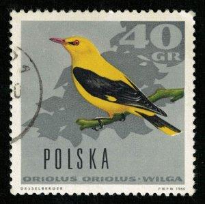 Bird (TS-2032)