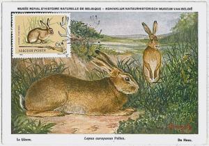 MAXIMUM CARD - POSTAL HISTORY - Hungary: Hares, Jackrabbits, Rabit, Hunting 1964