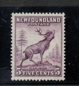 Newfoundland #257ix Very Fine Never Hinged Perf 13.5