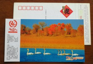 Swan Lake in Bayinbuluk Plateau Lake Xinjiang,CN10 twenty-four solar terms PSC