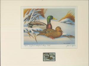 MARYLAND #1 1974 STATE DUCK STAMP PRINT MALLARDS 1st edition by John Taylor