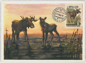 MAXIMUM CARD - POSTAL HISTORY -  Russia USSR: Deers, Mooses, Fauna, 1964