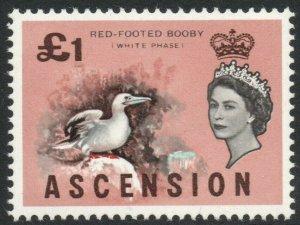 ASCENSION-1963 Birds £1 Sg 83 UNMOUNTED MINT V38021