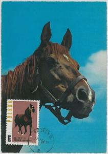 MAXIMUM CARD - POSTAL HISTORY -  Poland: Horses,  Fauna, 1964