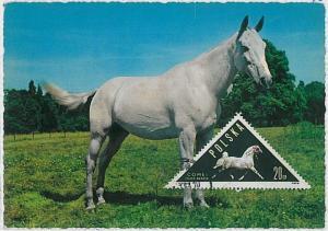 MAXIMUM CARD - POSTAL HISTORY -  Poland: Horses,  Fauna, 1964
