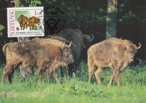Lithuania 1996 Maxicard Sc #532  1L European bison WWF