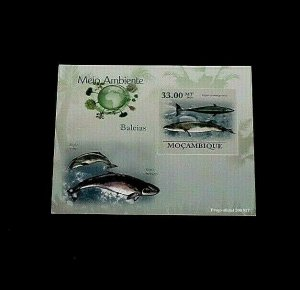 TOPICAL, 2010, MARINE LIFE, MOZAMBIQUE, IMPERF. PROOF CARD, LOT #181, MNH, LQQK