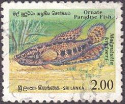 Sri Lanka # 978 used ~ 2r Fish