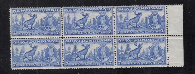 NEWFOUNDLAND # 235 VF-MNH BLOCK OF 6 7cts CARIBOU's CAT VALUE $48