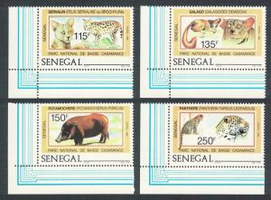 Senegal Serval Galagos Bush Pig Leopards Basse Casamance National Park 4v